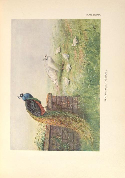 Danish naturalist and artist Henrik Gronvold (1858–1940) (106 работ)