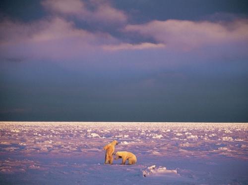 Подборка фотографий от National Geographic часть 2 (273 фото)