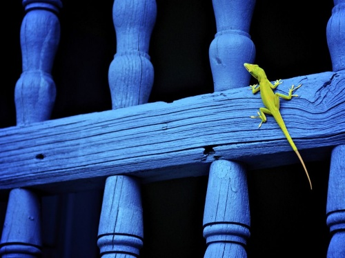 Подборка фотографий от National Geographic (206 фото)