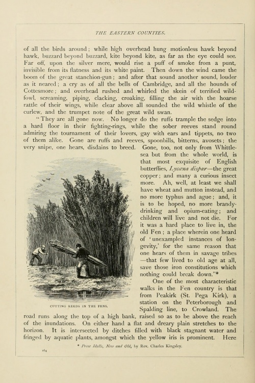 English pictures drawn with pen and pencil (1879) (164 работ)