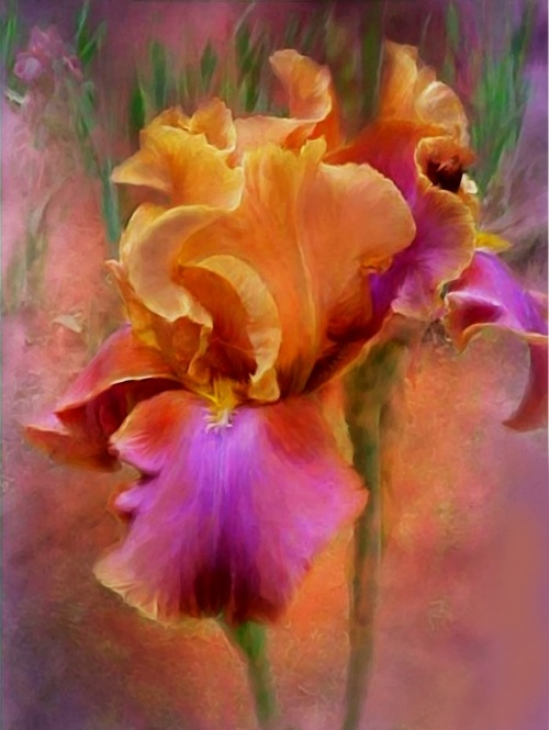 Восхитительные цветы фотохудожницы Кэрол Каваларис (57 работ)