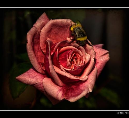 Фотограф Lombart BCN (328 фото)