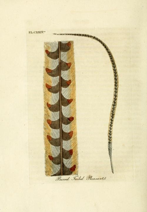 A general history of birds (1823) (25 работ)