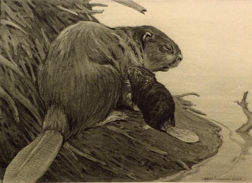 Charles Livingston Bull (1874 - 1932) (87 работ)
