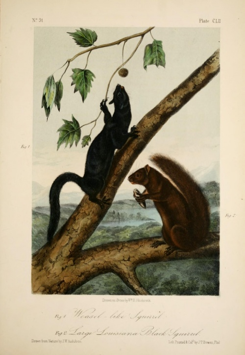 John James Audubon (1785—1851). The quadrupeds of North America (1851) (160 работ)