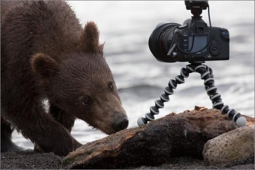 Фотограф Игорь Гущин (Москва) (58 фото)