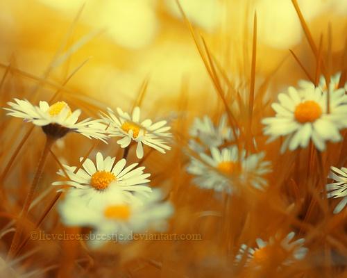 Lieveheersbeestje (45 фото)