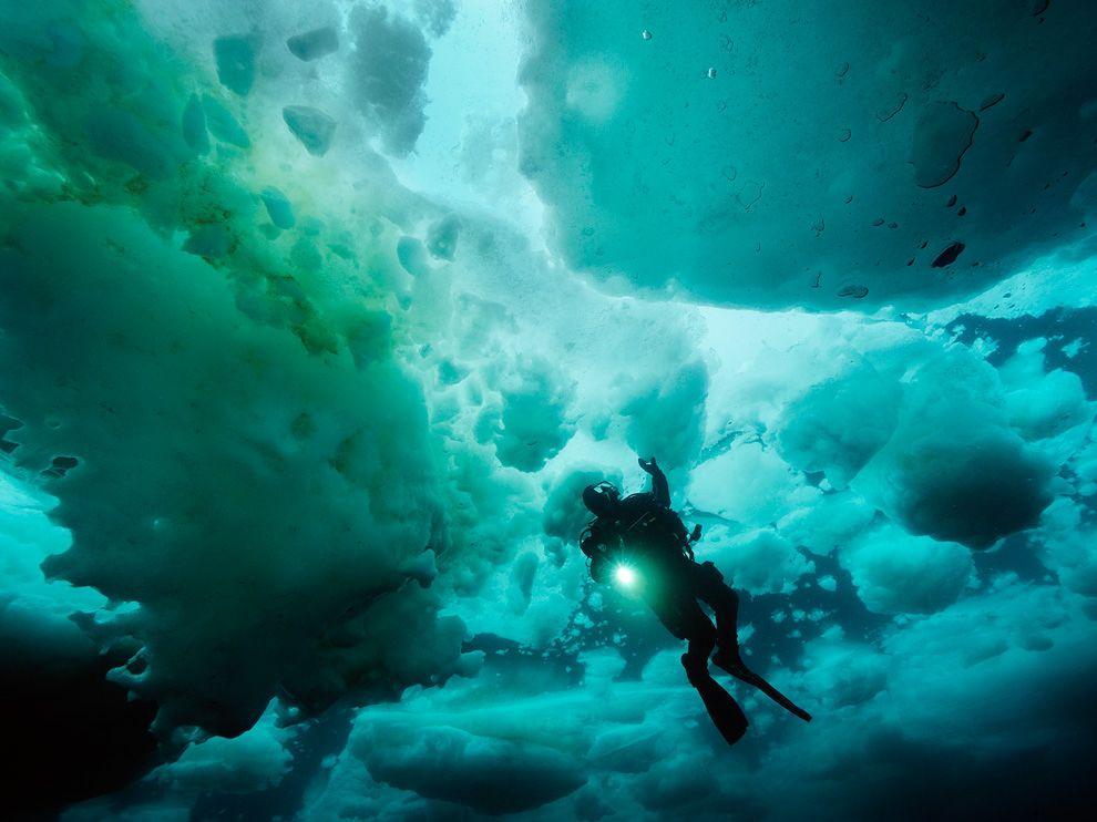 ледовитый океан под водой фото камбрера детально