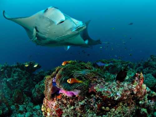 Underwater. National Geographic (20 фото)