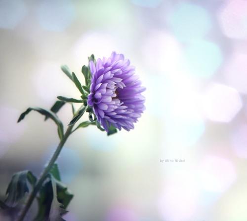 Фото-нежность Alina Nickel (23 фото)