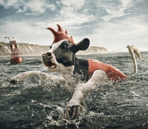 Забавные коровы Энди Махра (11 работ)
