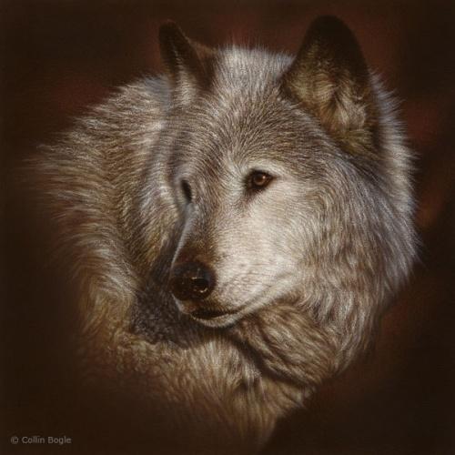 Фотореалистичные картины Коллина Богля (29 работ)