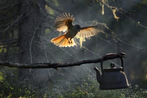 Мир в фотографиях (60 фото)