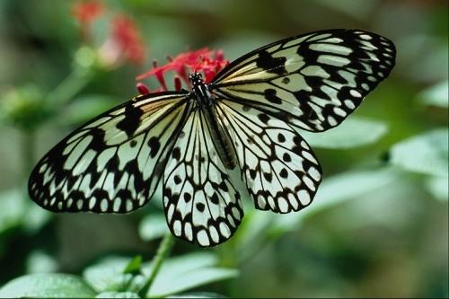 """Клипарт """"Бабочки"""" (50 фото)"""