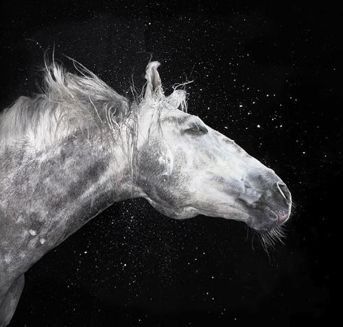 Лошади от Tim Flach (22 работ)