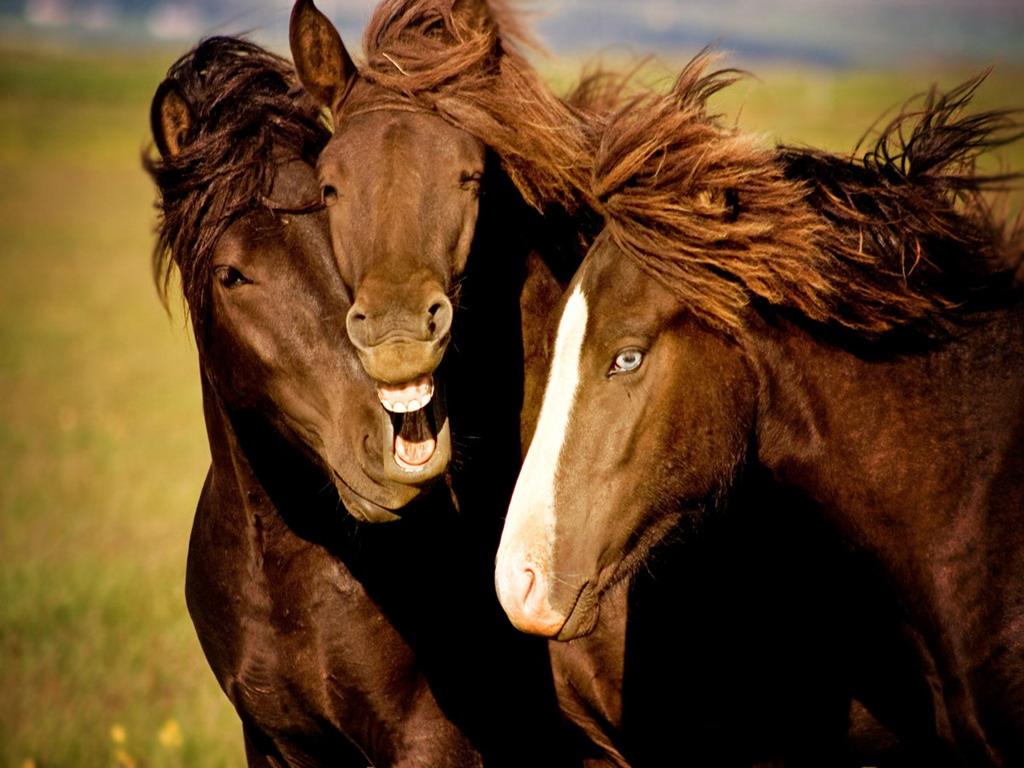 три лошадки картинки можно