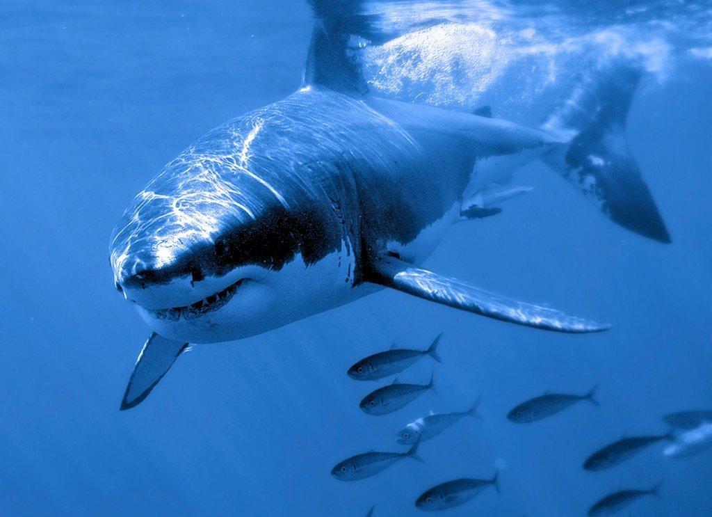 демин предыдущий фото разных акул декорация