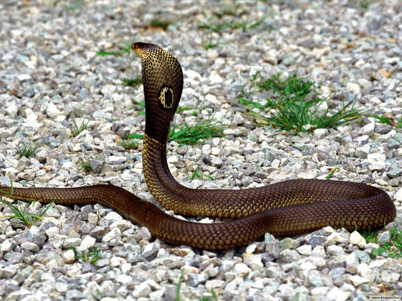 Foto ular raksasa di laut merah 44