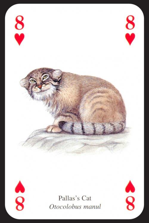 Игральные карты Звери (56 работ)