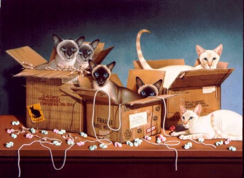 Braldt Bralds. Кошки (24 работ)