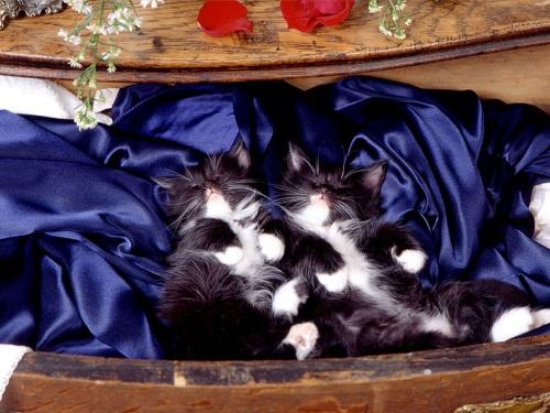Лучшая коллекция пушистиков! (Кошки и котята:) (37 фото)