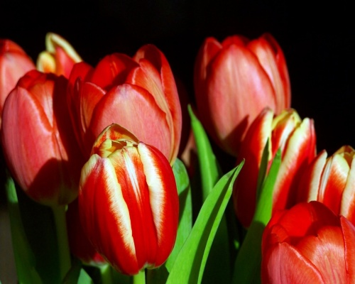 Подборка обоев на тему: Цветы (Часть 2) (60 фото)
