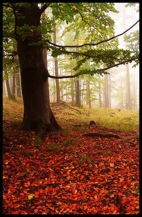 Золотая осень (15 фото)