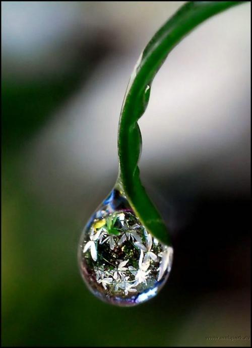 Капли воды, роса - все это красота (31 фото)