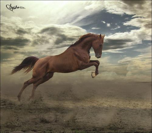 Красивые картинки лошадей (58 работ)