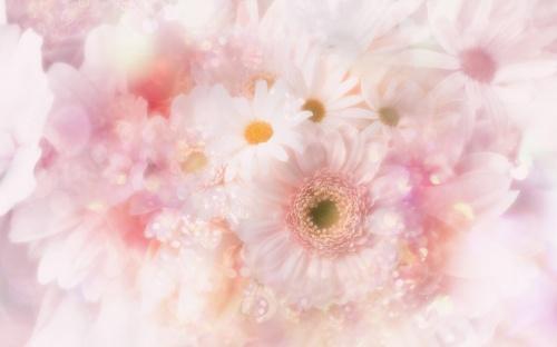Цветы - Фоны для оформления (87 фото)