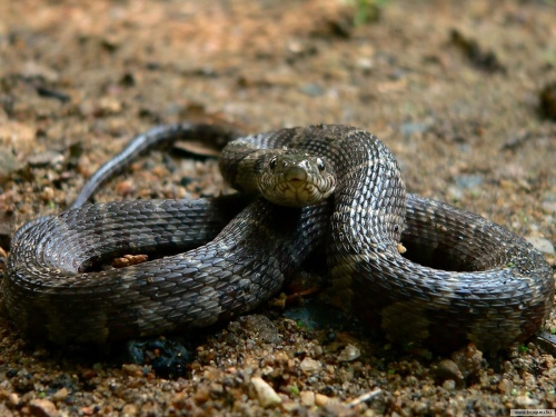 Змеи (29 фото)