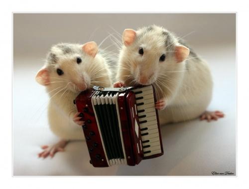 Мыши (74 фото)