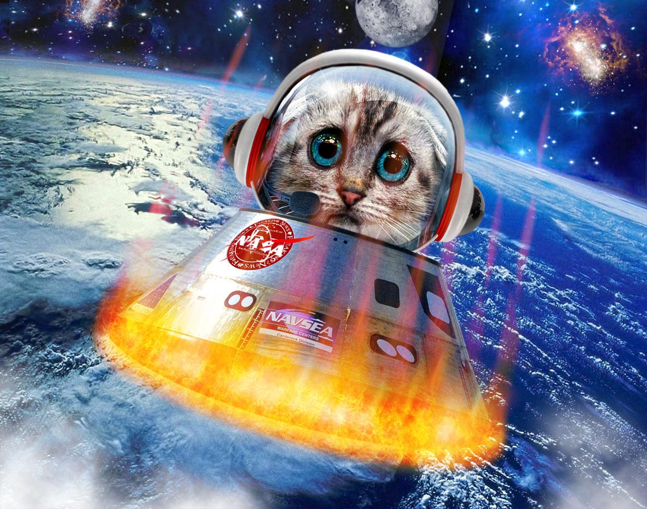 картинки животных в космосе основном