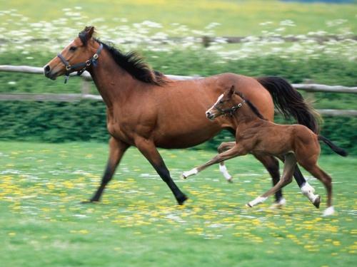 Обои красивых лошадей (62 фото)