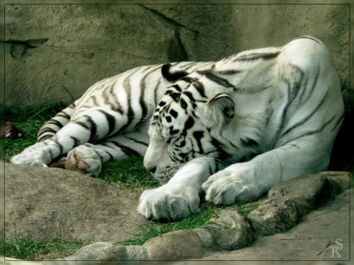 Красочные картинки животных (50 фото)