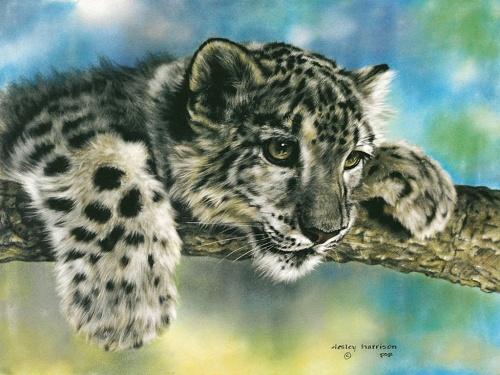 Животный мир от Lesley Harrison (45 работ)