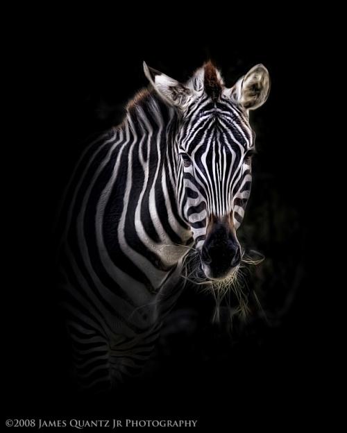Портреты животных (18 фото)