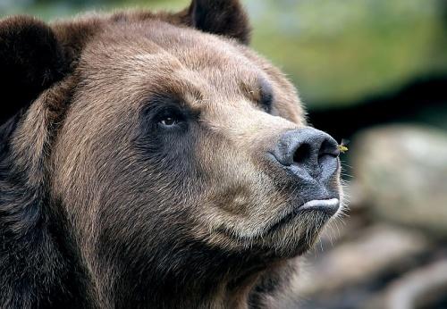Животные... Фотограф Terry Cervi (87 фото)