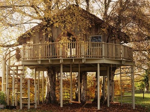 Дома на деревьях (16 фото)