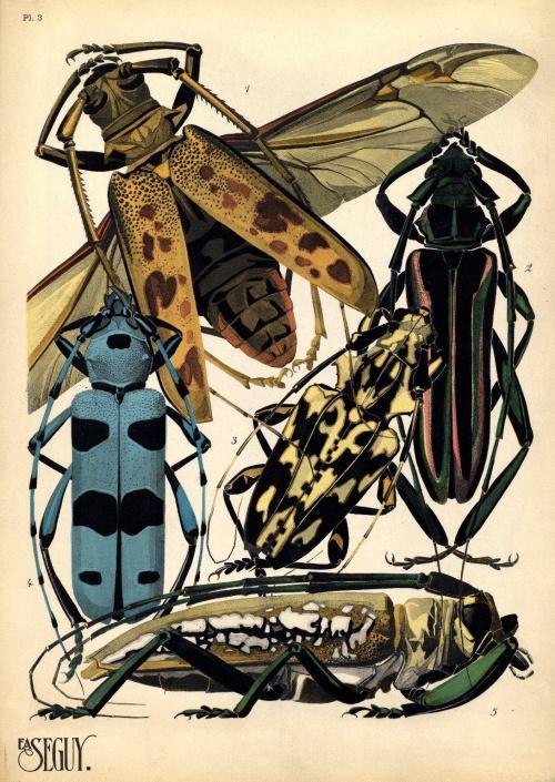 E A Seguy - Insectes & Papillons (42 работ)