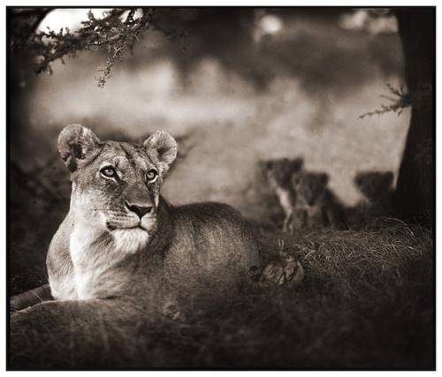 Black&White Africa by Nick Brandt  (62 фото)