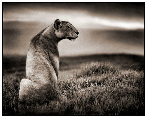 Black&White Africa by Nick Brandt  (62 фото)