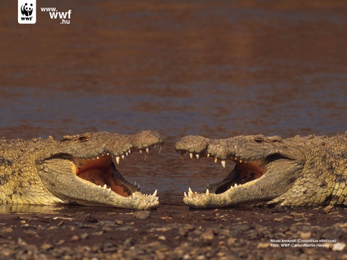 Photogallery by WWF (80 фото)