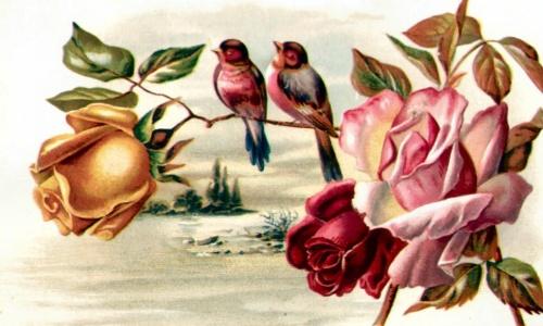 Старинные рисунки (открытки): ЦВЕТЫ (74 работ)