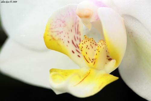 Allon Kira. #4_Ancestor whole zhivogo. Beautiful flowerses (72 фото)