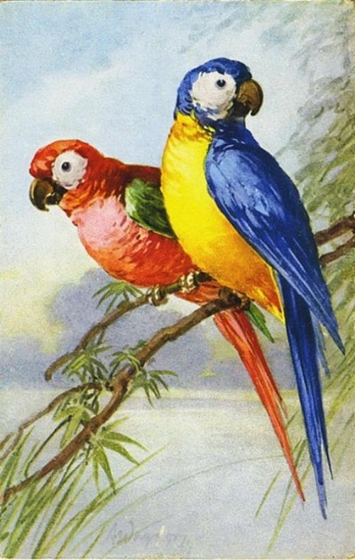 Цветы и попугаи от Catherine Klein (38 работ)