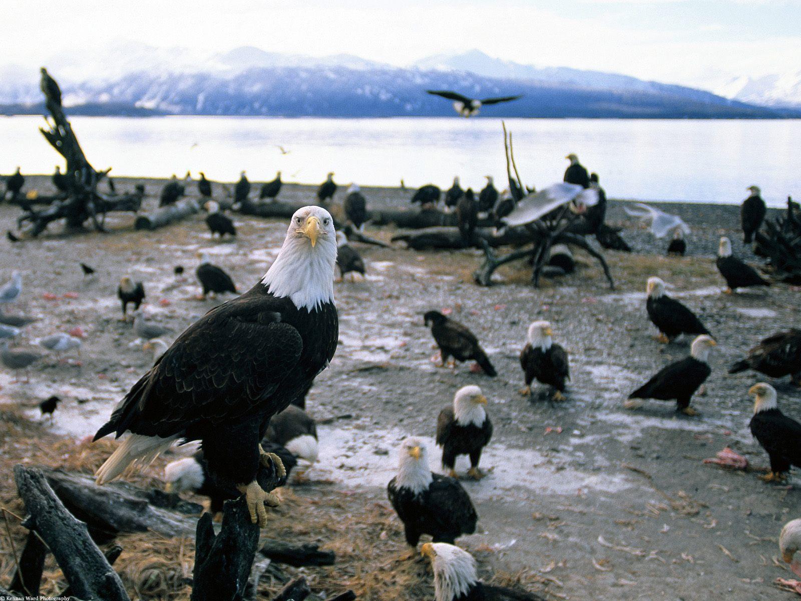 больших птиц с названиями