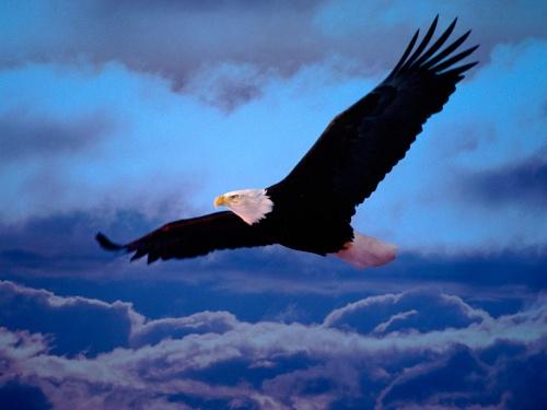 Подборка фотографий птиц (44 фото)