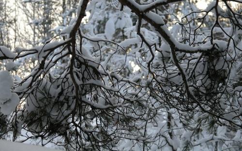"""Подборка фотографий на тему """"Зима""""Подборка фотографий на тему """"Зима"""" (40 фото)"""