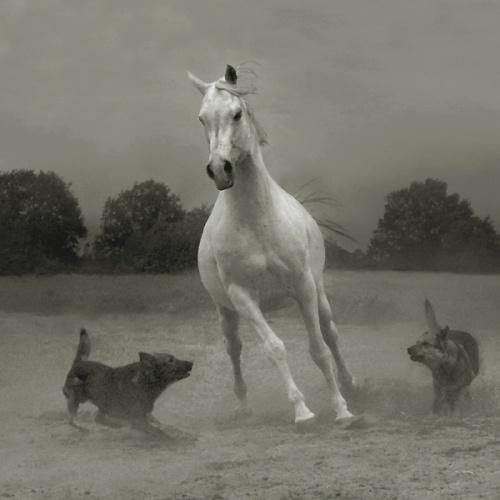 Лошади. Работы Wojciech Kwiatkowski (28 работ)